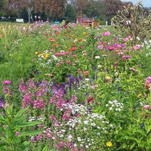 Tacke's Blumenfelder - Blühpate / Blumenpate